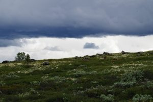 Norwegen, 21. – 26.07.2015