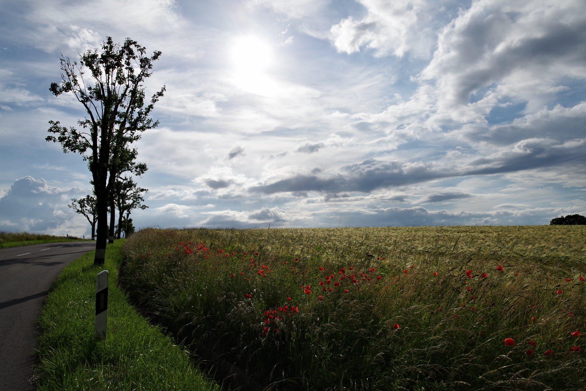Benelux-Länder, 14.06.2016