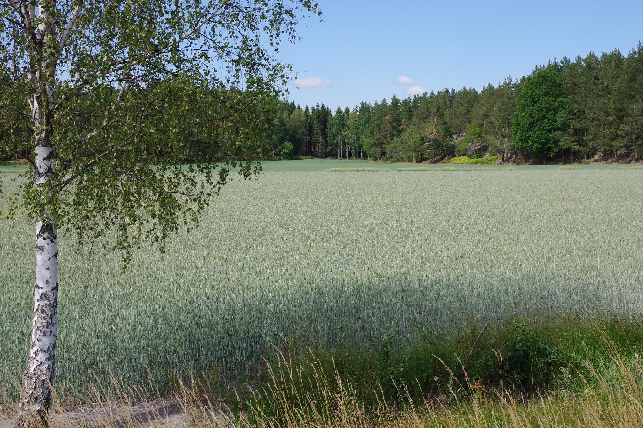 Schweden, 10.07.2018